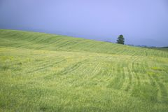 Beautiful landscape. Green summer field on blue sky before the thunderstorm.  Royalty Free Stock Photo