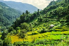 Rice terraces in Nepalese Himalayas Royalty Free Stock Photography