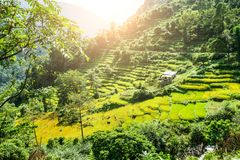 Rice terraces in Nepalese Himalayas Royalty Free Stock Image