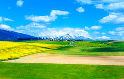 Beautiful landscape, green and yellow meadow with field and snow mountain and village. Slovakia, Central Europe, region. Liptov, Mountain High Tatry Stock Photography