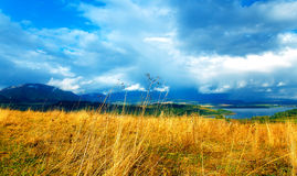 Beautiful landscape, green and yellow meadow and Royalty Free Stock Images
