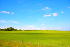 Beautiful landscape with growing wheat Royalty Free Stock Image