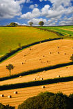 Beautiful landscape after the harvest Stock Images