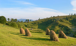 Beautiful landscape with haystacks on a sunny morning on the slo Stock Images
