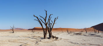 Beautiful landscape of Hidden Vlei in Namib desert panorama Stock Photography