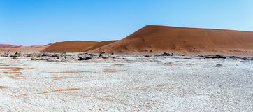 Beautiful landscape of Hidden Vlei in Namib desert panorama. Wide panorama of beautiful sunrise landscape of hidden Dead Vlei in Namib, blue sky, best place of Royalty Free Stock Photography