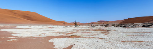 Beautiful landscape of Hidden Vlei in Namib desert panorama. Wide panorama of beautiful sunrise landscape of hidden Dead Vlei in Namib, blue sky, best place of Stock Images