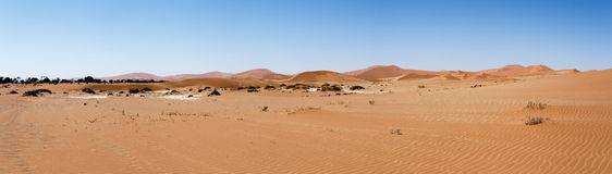 Beautiful landscape of Hidden Vlei in Namib desert panorama. Wide panorama of beautiful sunrise landscape of hidden Dead Vlei in Namib, blue sky, best place of Stock Photos