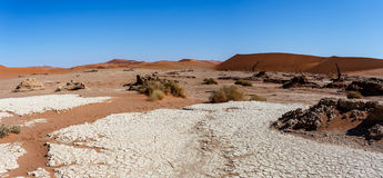 Beautiful landscape of Hidden Vlei in Namib desert panorama. Wide panorama of beautiful sunrise landscape of hidden Dead Vlei in Namib, blue sky, best place of Royalty Free Stock Photo