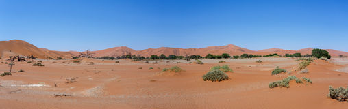 Beautiful landscape of Hidden Vlei in Namib desert panorama. Wide panorama of beautiful sunrise landscape of hidden Dead Vlei in Namib, blue sky, best place of Stock Photography