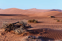 Beautiful landscape of Hidden Vlei in Namib desert Royalty Free Stock Images