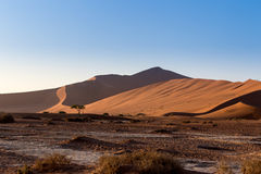Beautiful landscape of Hidden Vlei in Namib desert. Beautiful sunrise landscape of hidden Dead Vlei in Namib desert, best place of Namibia Royalty Free Stock Photo