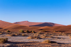 Beautiful landscape of Hidden Vlei in Namib desert. Beautiful sunrise landscape of hidden Dead Vlei in Namib desert, best place of Namibia Stock Image