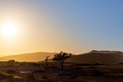 Beautiful landscape of Hidden Vlei in Namib desert. Beautiful sunrise landscape of hidden Dead Vlei in Namib desert, best place of Namibia, sunlight early Stock Photo