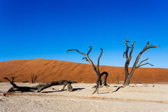 Beautiful landscape of Hidden Vlei in Namib desert. Beautiful sunrise landscape of hidden Dead Vlei in Namib desert with blue sky, this is best place of Namibia Stock Photo