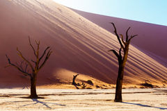 Beautiful landscape of Hidden Vlei in Namib desert. Beautiful sunrise landscape of hidden Dead Vlei in Namib desert with blue sky, this is best place of Namibia Stock Image