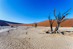 Beautiful landscape of Hidden Vlei in Namib desert. Beautiful sunrise landscape of hidden Dead Vlei in Namib desert with blue sky, this is best place of Namibia Stock Photos