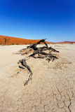 Beautiful landscape of Hidden Vlei in Namib desert Royalty Free Stock Photos
