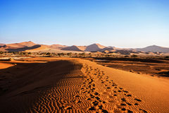 Beautiful landscape of Hidden Vlei in Namib desert. Beautiful sunrise landscape of hidden Dead Vlei in Namib desert with blue sky, this is best place in Namibia Stock Images