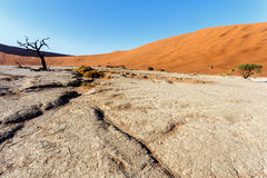 Beautiful landscape of Hidden Vlei in Namib desert. Beautiful sunrise landscape of hidden Dead Vlei in Namib desert with blue sky, this is best place in Namibia Stock Image