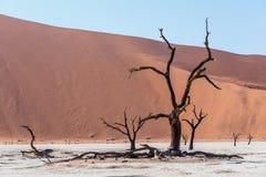 Beautiful landscape of Hidden Vlei in Namib desert Royalty Free Stock Photo