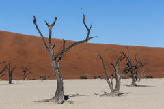 Beautiful landscape of Hidden Vlei in Namib desert. Beautiful sunrise landscape of hidden Dead Vlei in Namib desert with dead acacia tree, best place of Namibia Stock Photo