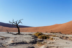 Beautiful landscape of Hidden Vlei in Namib desert. Beautiful sunrise landscape of hidden Dead Vlei in Namib desert with dead acacia tree, best place of Namibia Royalty Free Stock Image