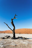 Beautiful landscape of Hidden Vlei in Namib desert. Beautiful sunrise landscape of hidden Dead Vlei in Namib desert with dead acacia tree, best place of Namibia Stock Image