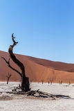 Beautiful landscape of Hidden Vlei in Namib desert Royalty Free Stock Photography