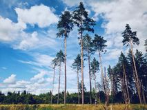Beautiful landscape. With high trees under cloudy Stock Photo