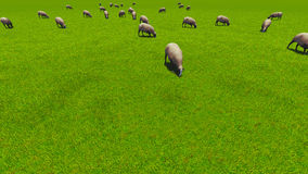 Beautiful landscape - hills covered by green grass. With herds of sheep 3d rendering 4 Stock Photos