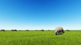 Beautiful landscape - hills covered by green grass. With herds of sheep 3d rendering 1 Royalty Free Stock Photography