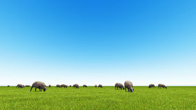 Beautiful landscape - hills covered by green grass. With herds of sheep 3d rendering 5 Royalty Free Stock Photo