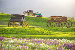 Beautiful landscape Historic carriage in flower field Royalty Free Stock Photography