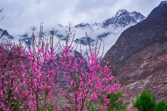Beautiful Landscape of Hunza Valley in Autumn season Stock Image