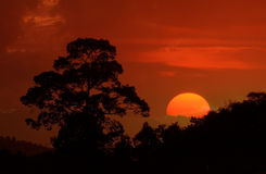 Beautiful landscape image with trees silhouette at sunset Royalty Free Stock Photography