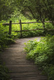 Beautiful landscape image of wooden boardwalk through lush green. Stunning landscape image of wooden boardwalk through lush green English countryside forest in Stock Photos