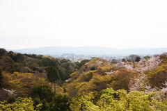 Beautiful landscape in japan. Beautiful landscape of kyoto japan royalty free stock photo