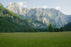 Beautiful landscape of Julian alps in Slovenia. spruce forest on a grassy meadow. royalty free stock photography