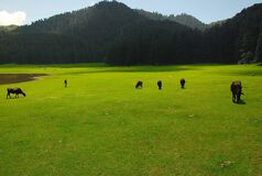 Beautiful landscape of khajjiar