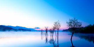Beautiful landscape with a lake and mountains in the background and trees in the water. Blue and purple color tone. Stock Image