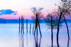 Beautiful landscape with a lake and mountains in the background and trees in the water. Blue and purple color tone Royalty Free Stock Images
