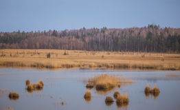 A beautiful landscape of a lake with reeds where migratory birds can rest. In an early spring Royalty Free Stock Photo