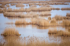 A beautiful landscape of a lake with reeds where migratory birds can rest. In an early spring Royalty Free Stock Photos
