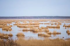A beautiful landscape of a lake with reeds where migratory birds can rest. In an early spring Stock Photography