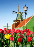 Beautiful landscape with a lantern, tulips and wind Mill in the Royalty Free Stock Photography