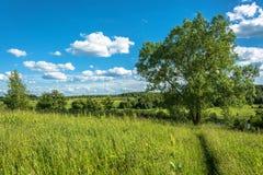 Beautiful landscape with large shady tree. Stock Image