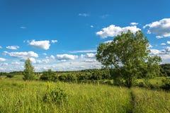 Beautiful landscape with large shady tree. Royalty Free Stock Image