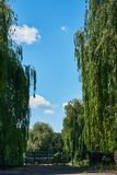 Beautiful landscape with large weeping willows Stock Photo