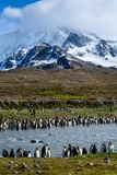 Beautiful landscape leading up to a craggy snow covered mountain, large number of King Penguins lining both sides of a silt filled. River, St. Andrews Bay royalty free stock photography
